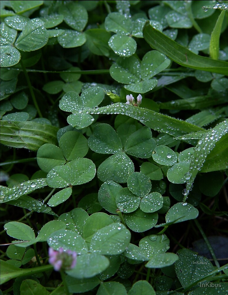 Clover dew by InKibus