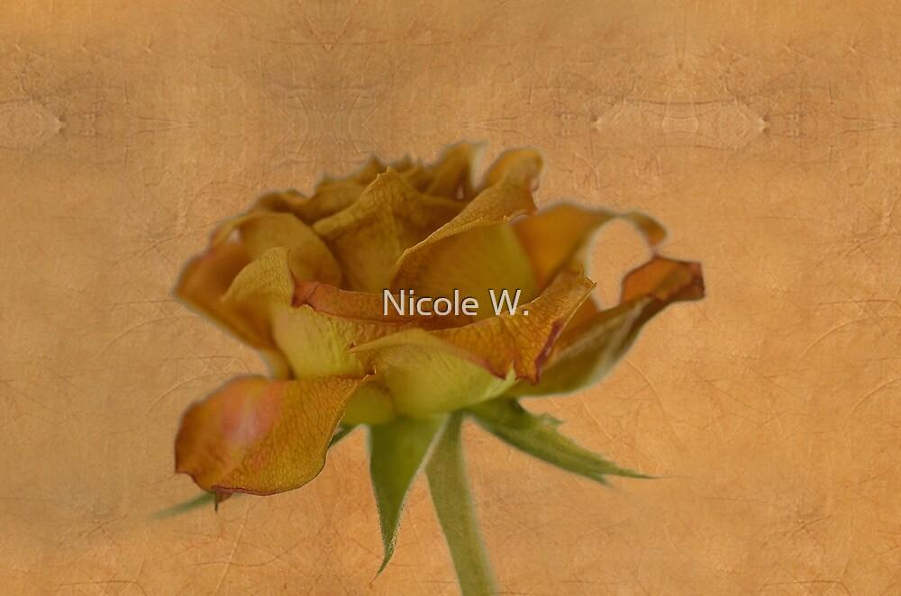 Faded beauty of a dead rose by Nicole W.