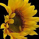 sunflower by Nicole W.