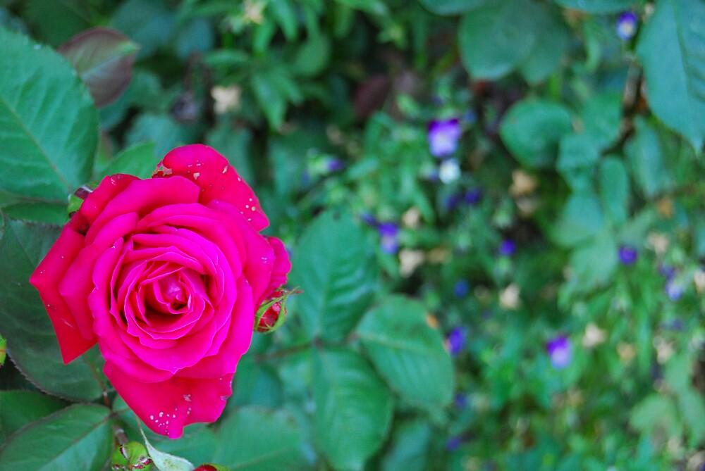 fleurs by afollett