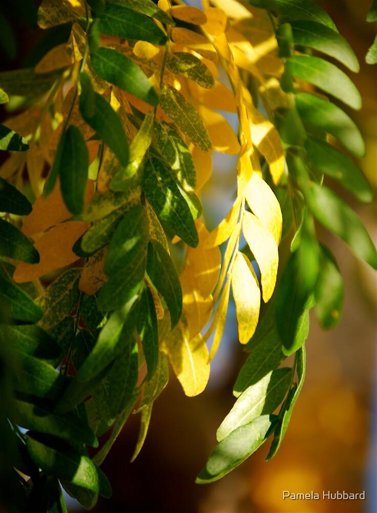 Season Of Change by Pamela Hubbard