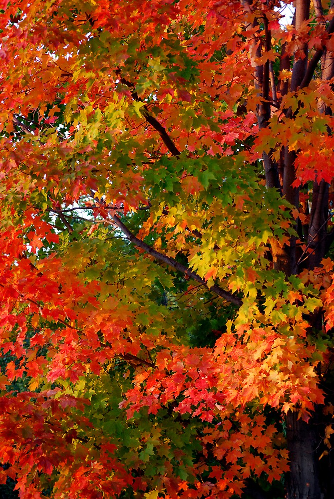 Fighting Fall by Robert Goulet