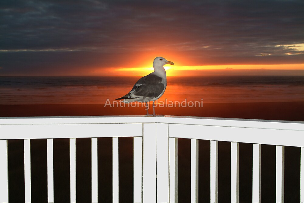 Bird at sunset. by Anthony Jalandoni