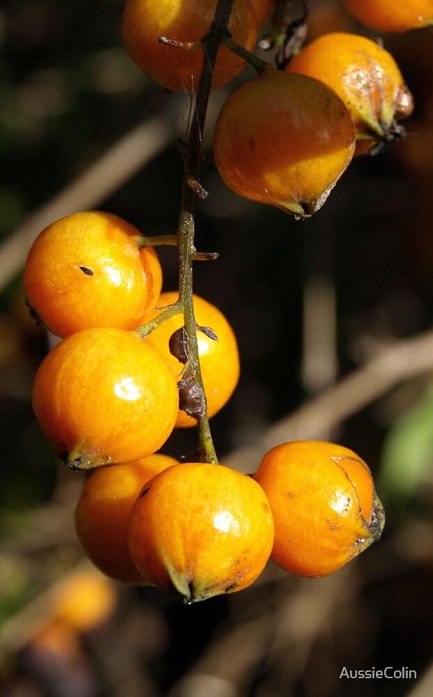 Orange Berry by Colin Van Der Heide