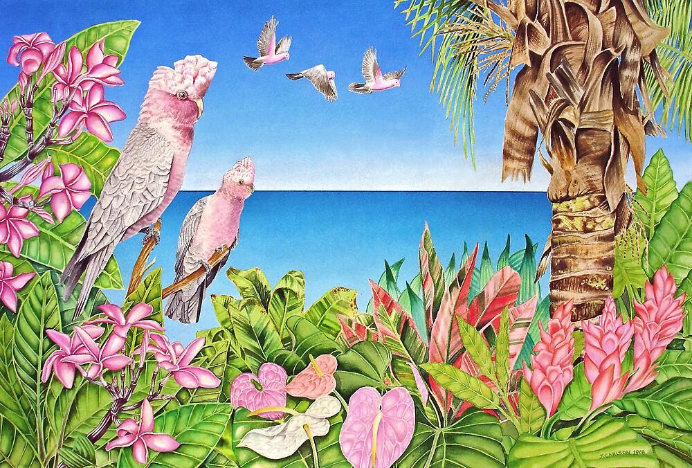 Australian Pink Galahs by joeyartist