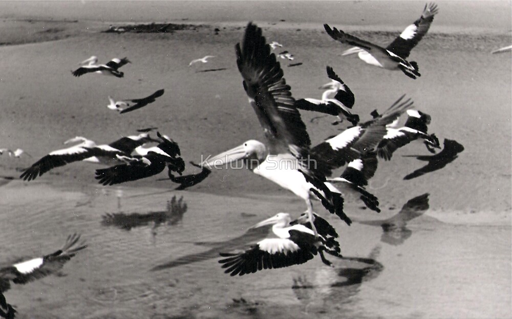 Flying Pelicans by Kelwin Smith