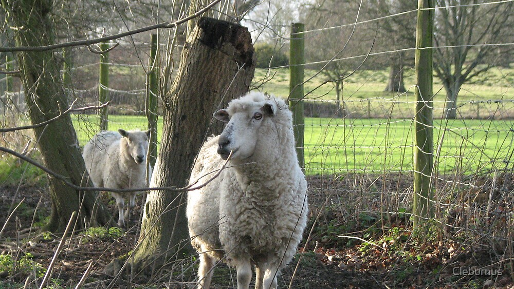 Standard Issue English Sheep by Cleburnus