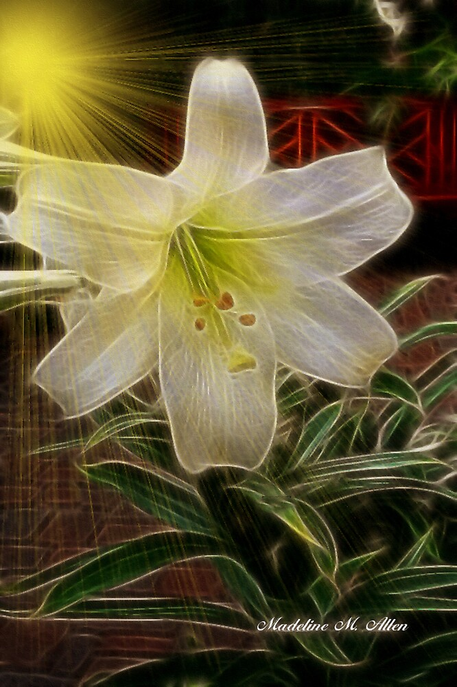 FRAGILE BEAUTY by Madeline M  Allen