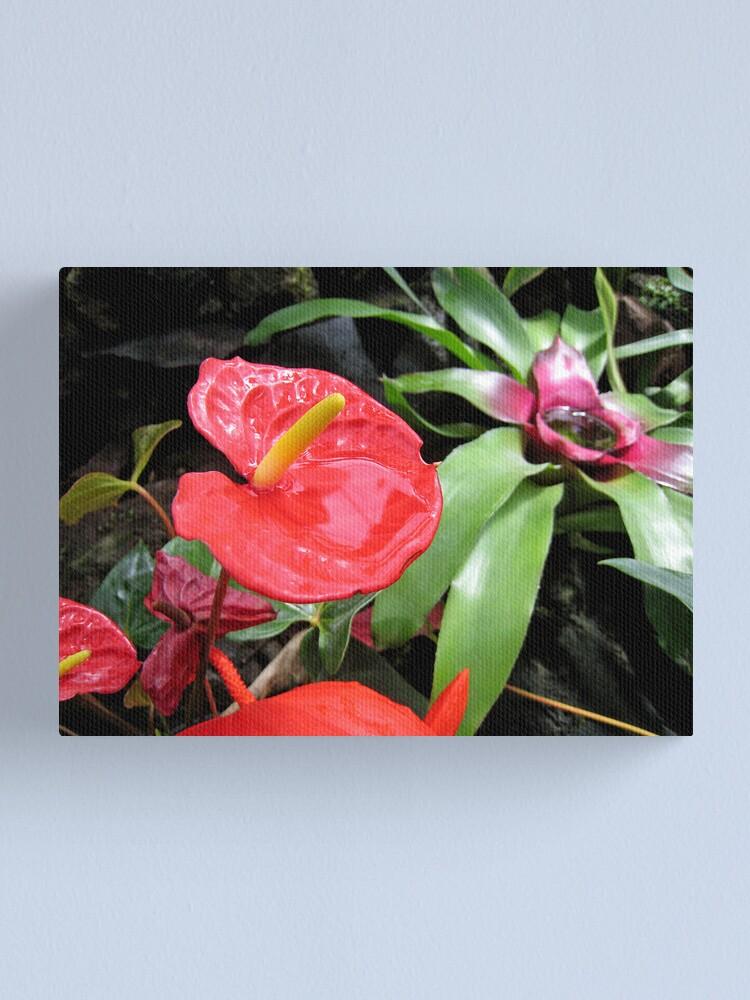 Alternate view of Red Anthurium Canvas Print