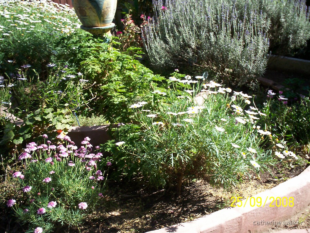 more of my circular garden by catherine walker