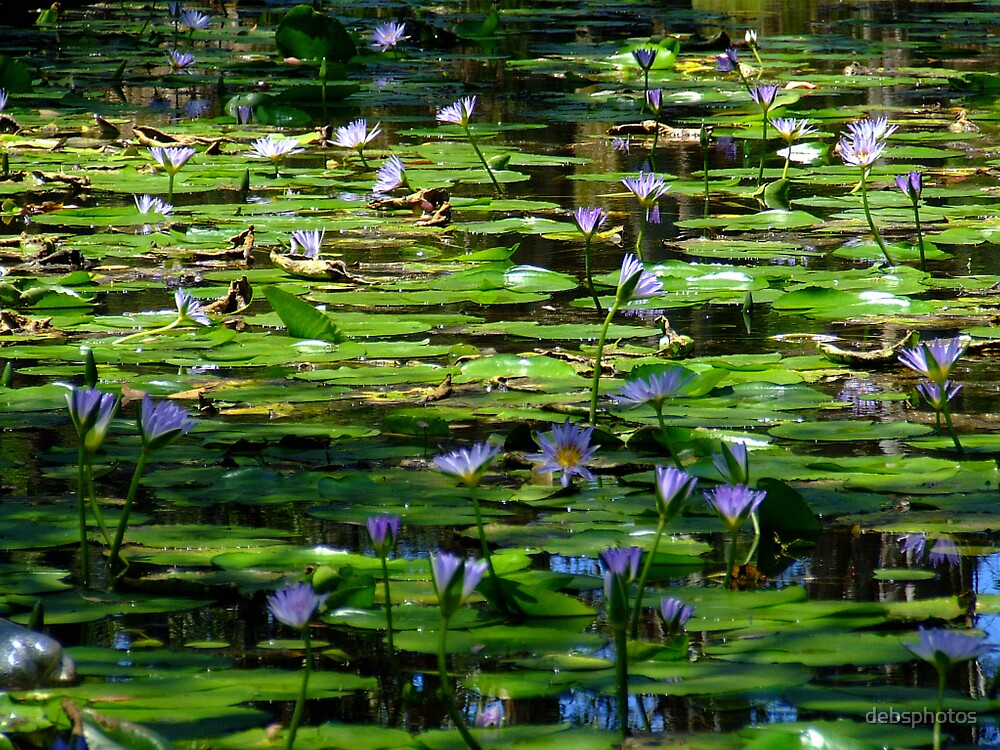 """""""Lilies on the Dam"""" by debsphotos"""
