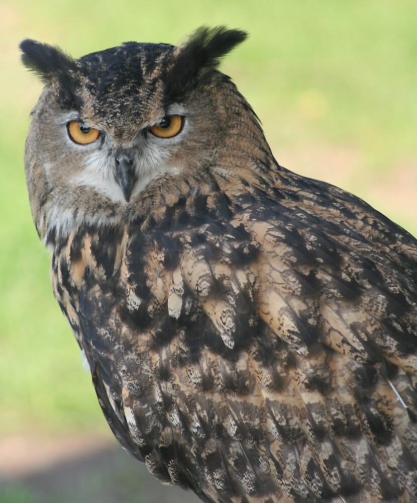 Eagle Owl by declown