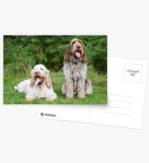 Italian Spinoni  Dogs ~ Annabelle and Thane  Postcards