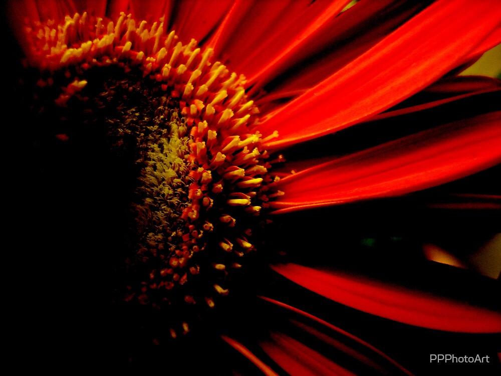 Vivid Gerbera by PPPhotoArt
