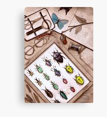 Insect Collector Canvas Print