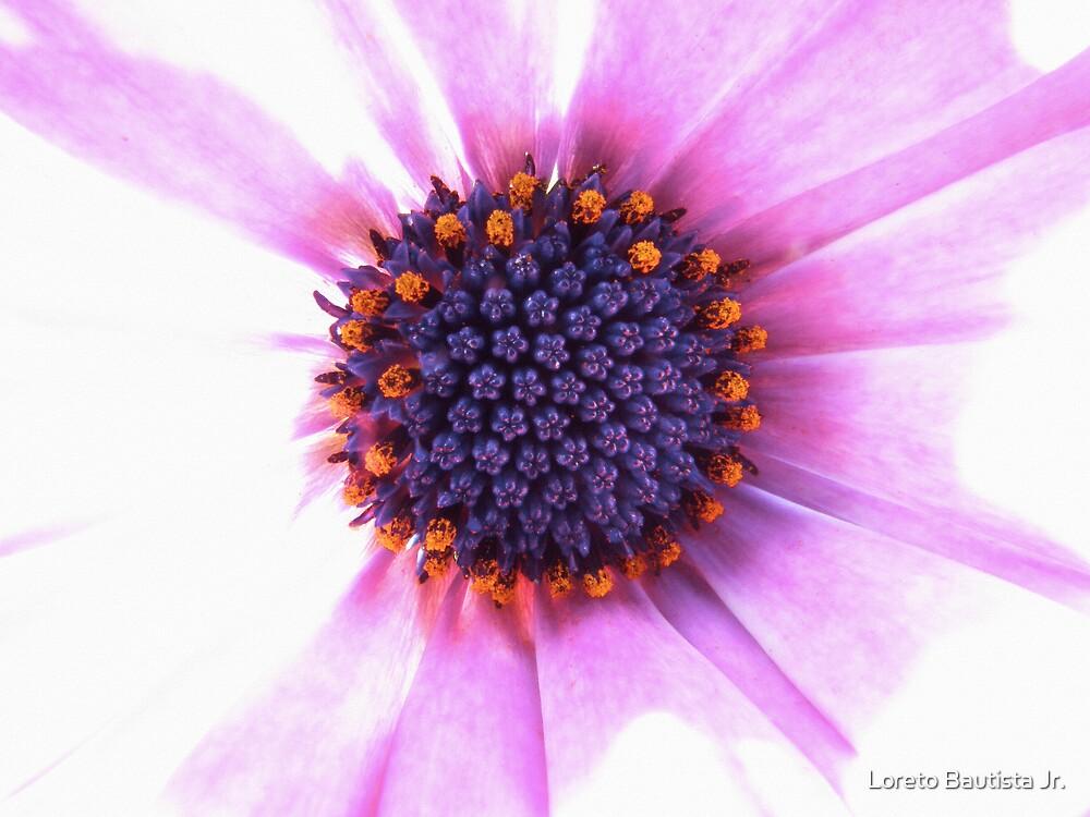purple heart by Loreto Bautista Jr.