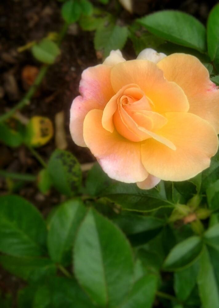 Just Peachy by Erika Benoit