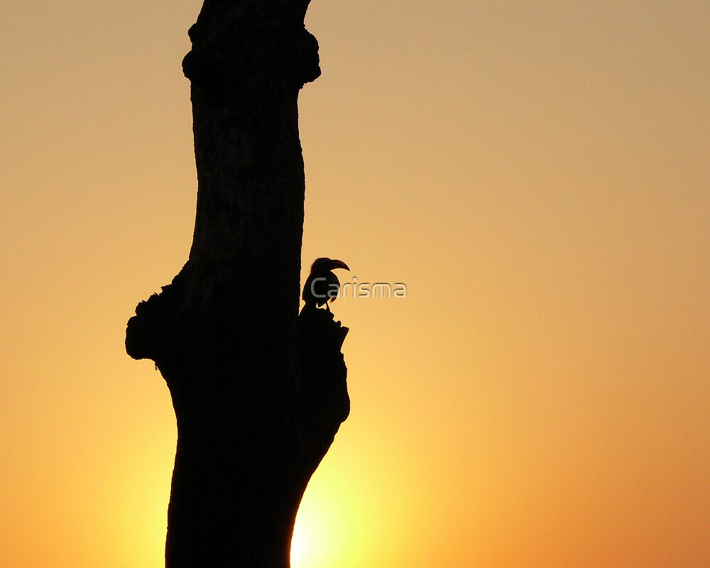 Sunset silhouette  by Carisma