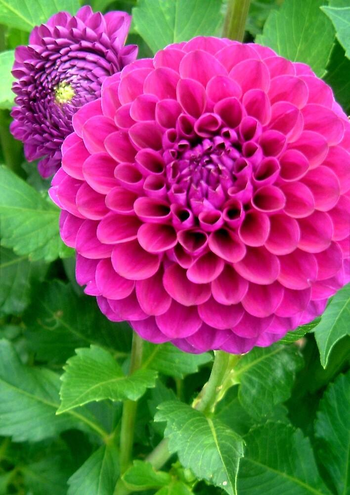 Passionate Purple by Erika Benoit