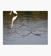 Duo Skimmers Photographic Print