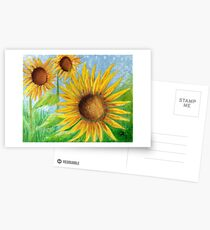 Sunflowers Postcards