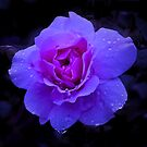 Purple Rose Challenge by Rosalie Dale