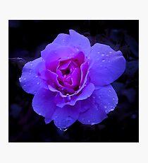 Purple Rose Challenge Photographic Print
