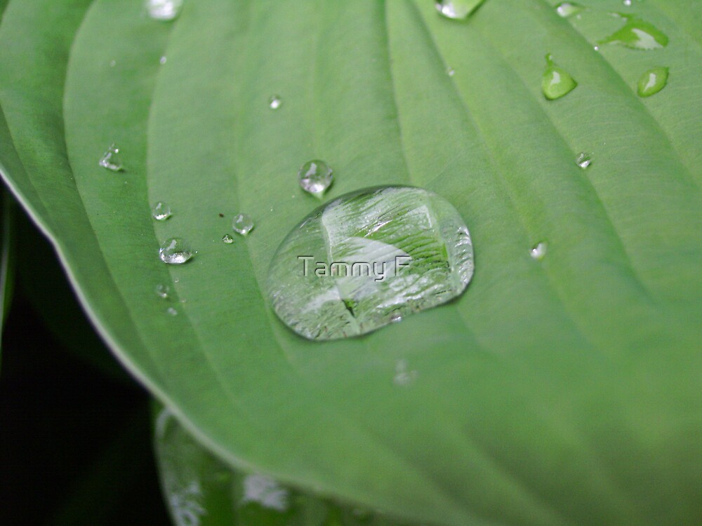 Green Raindrops by Tammy F
