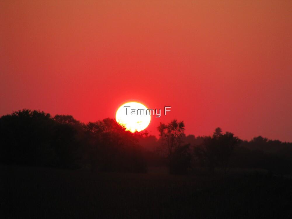 Red Sky by Tammy F