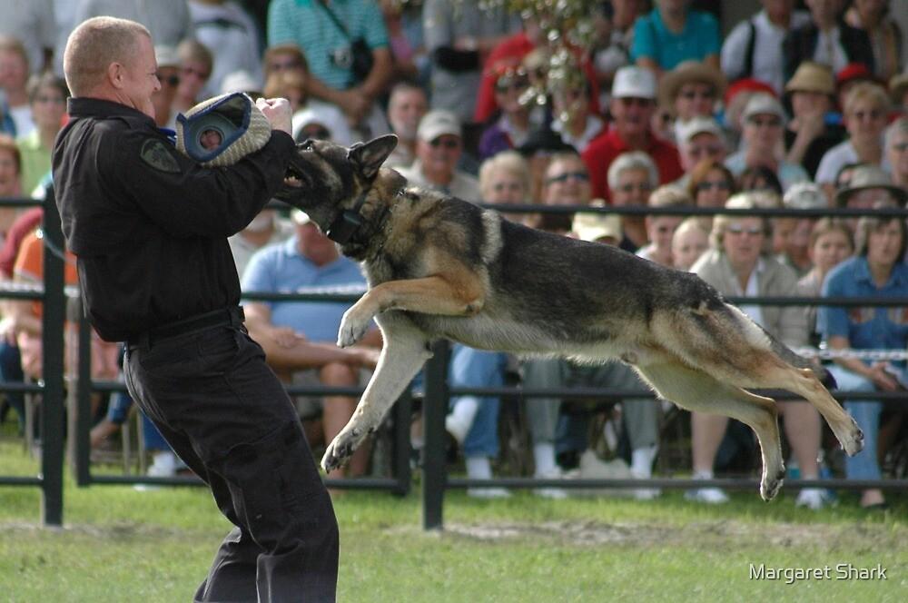 Attack Dog by Margaret Shark
