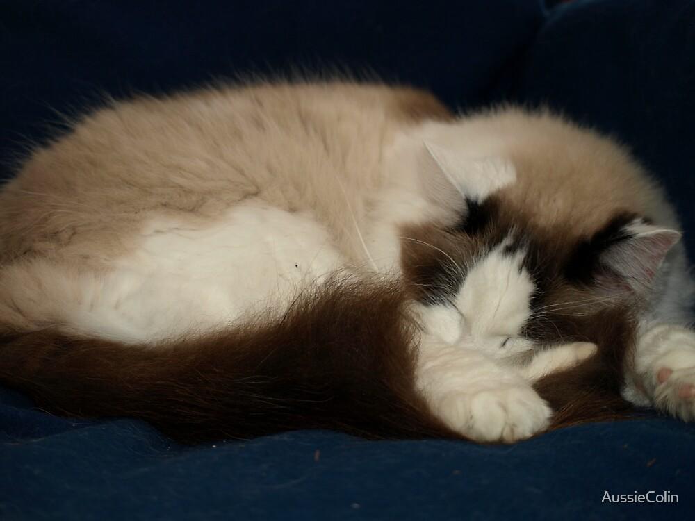 Oscar Sleeping by Colin Van Der Heide