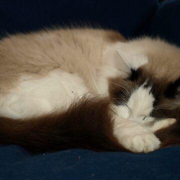 Oscar Sleeping by AussieColin