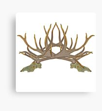 Bull elk skull European mount d Canvas Print