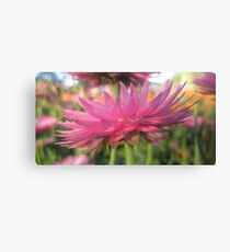 Papery Pink Canvas Print