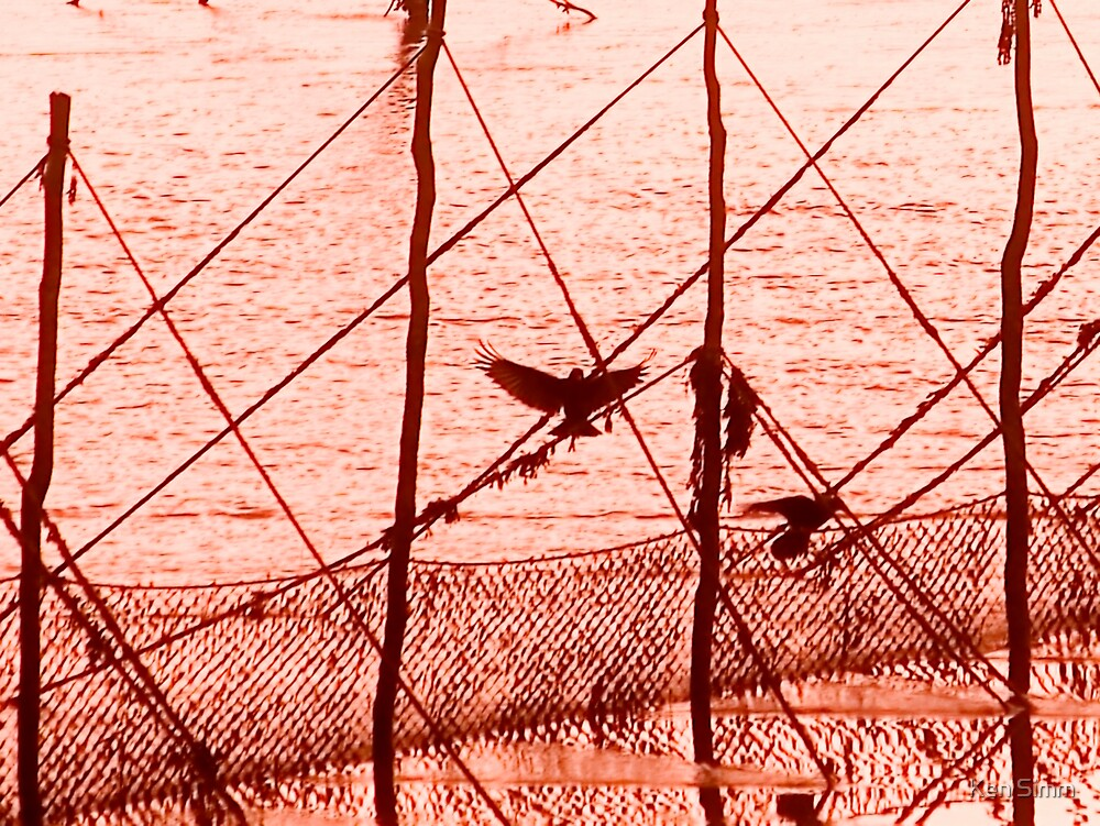Bird in the nets by Kenart