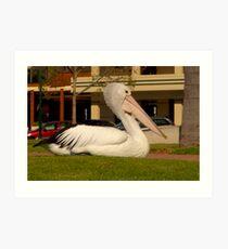 Renmark Pelican Art Print