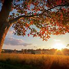 First Touch of Autumn by David Lamb