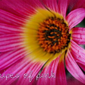 Stripes Of Pink by Megabyte