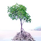 My favourite Tree.....Cape Tribulation.....North Queensland by Imi Koetz