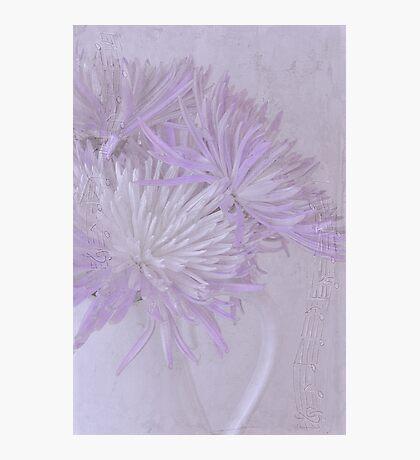 Purple And White Mums Photographic Print