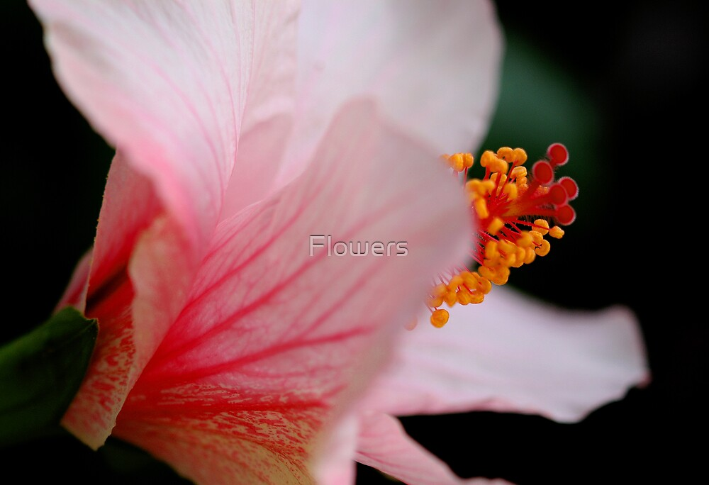 The Ballet by Flowers