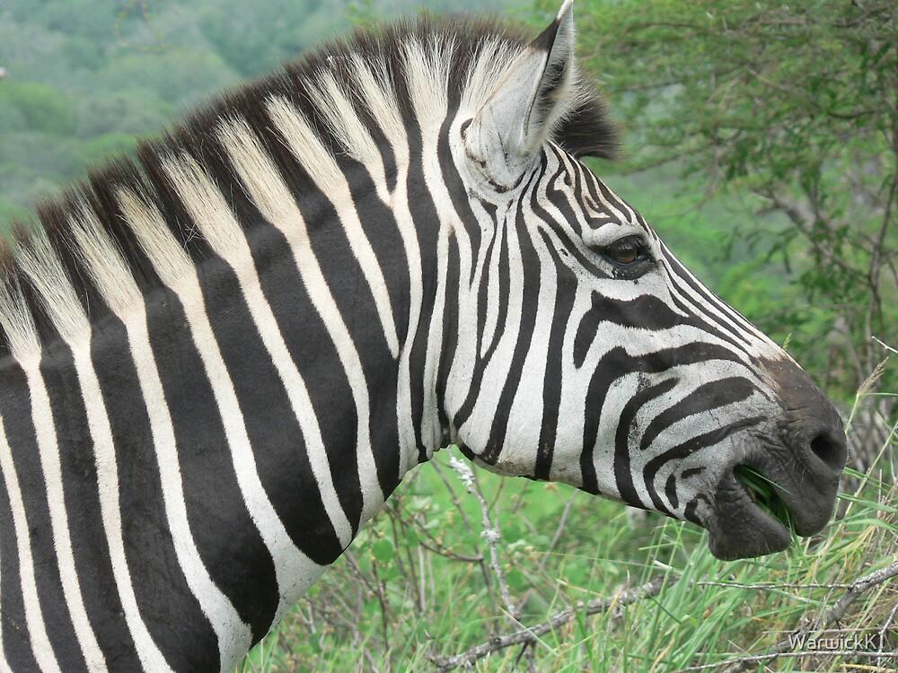 Zebra by WarwickK