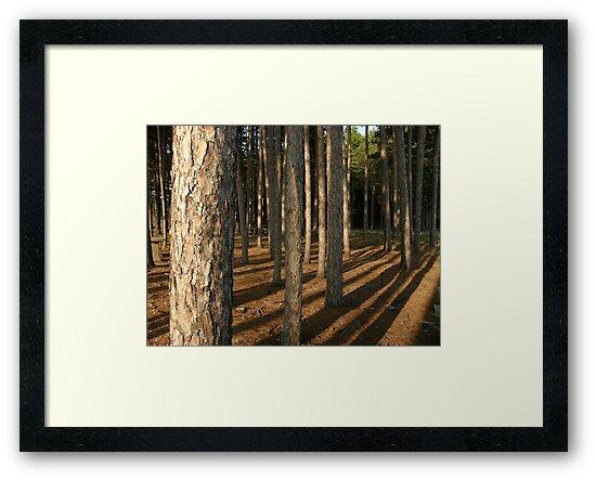 Pine Shadows by Len Bomba