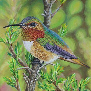 Anna's Hummingbird by janegirardot