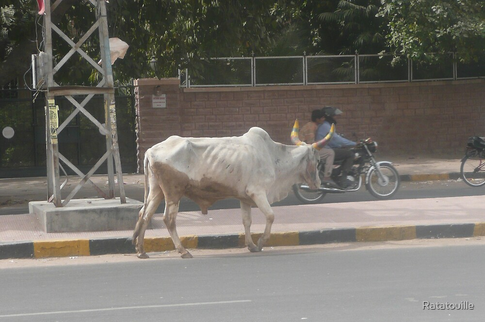 Cow in Jaipur by Ratatouille