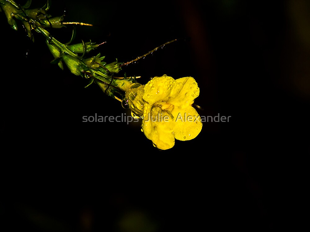Lil bit by solareclips~Julie  Alexander