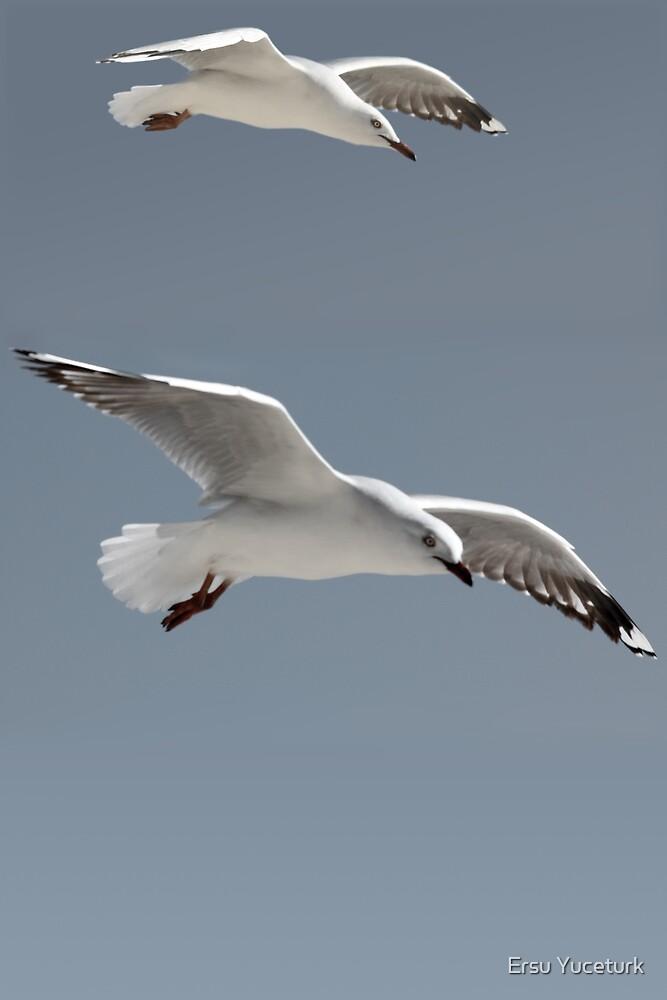 Free as a Bird by Ersu Yuceturk