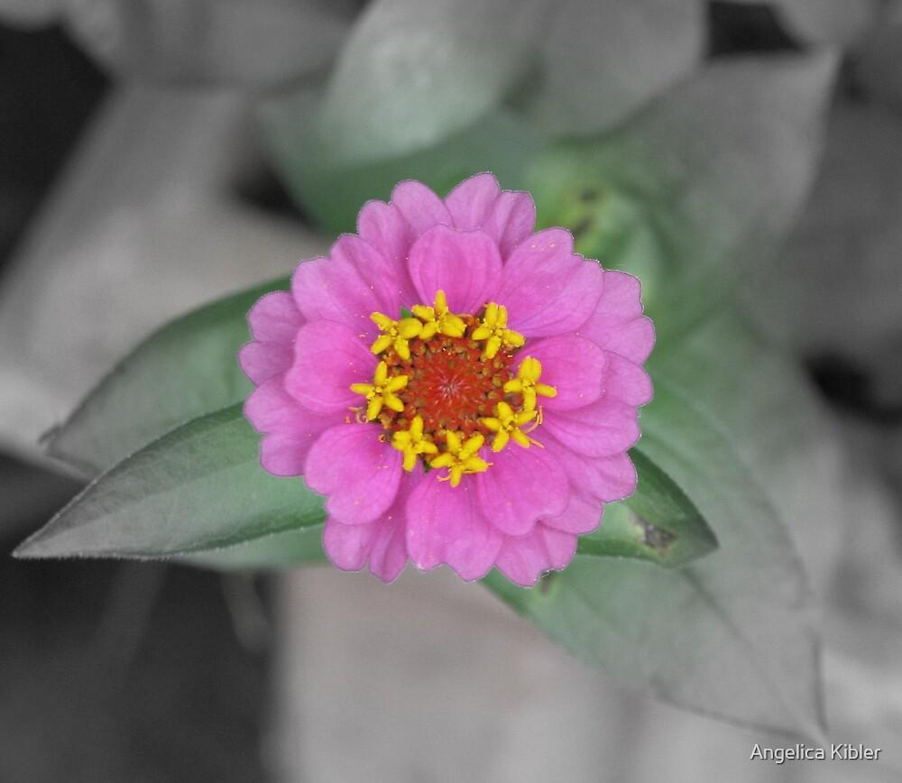 Perfect Petals by Angelica Kibler