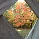 A Peak at Fall by Deb  Badt-Covell