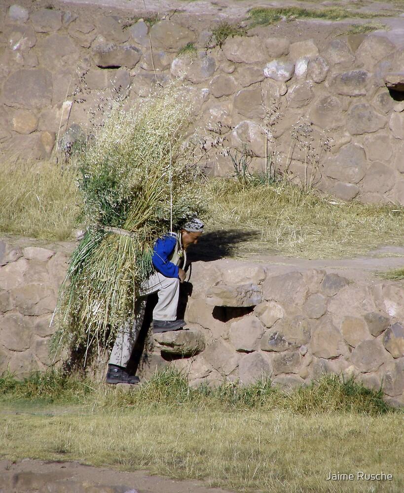 Moray Farmer by Jaime Rusche